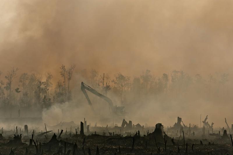 Foreste a Sumatra incendiate per fare spazio alle coltivazione di olio di palma