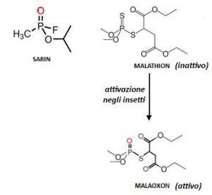 Figura 1 - Confronto tra Sarin (attivo), Malathion (inattivo) e Malaoxon (attivo)