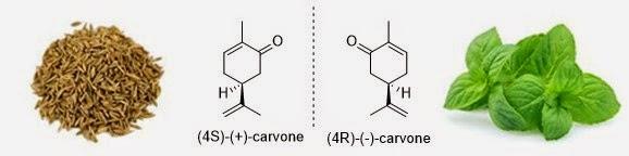Il carvone: due odori diversi