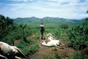 La morte per asfissia di numerosi animali